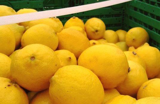 VITAMICA C: Si la vida te dona limones.. ¡recomendamos limonada!